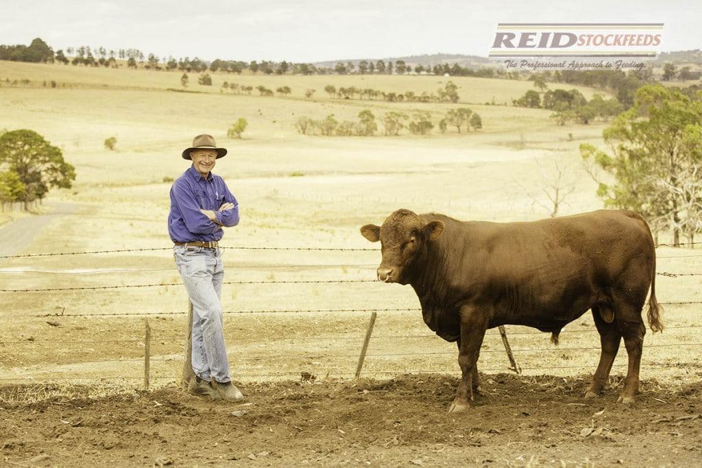 Ross Draper Cattle © Reid Stockfeeds 2015